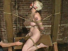 Sizzling blond slave Rose is standing throughout kinds of disrepute